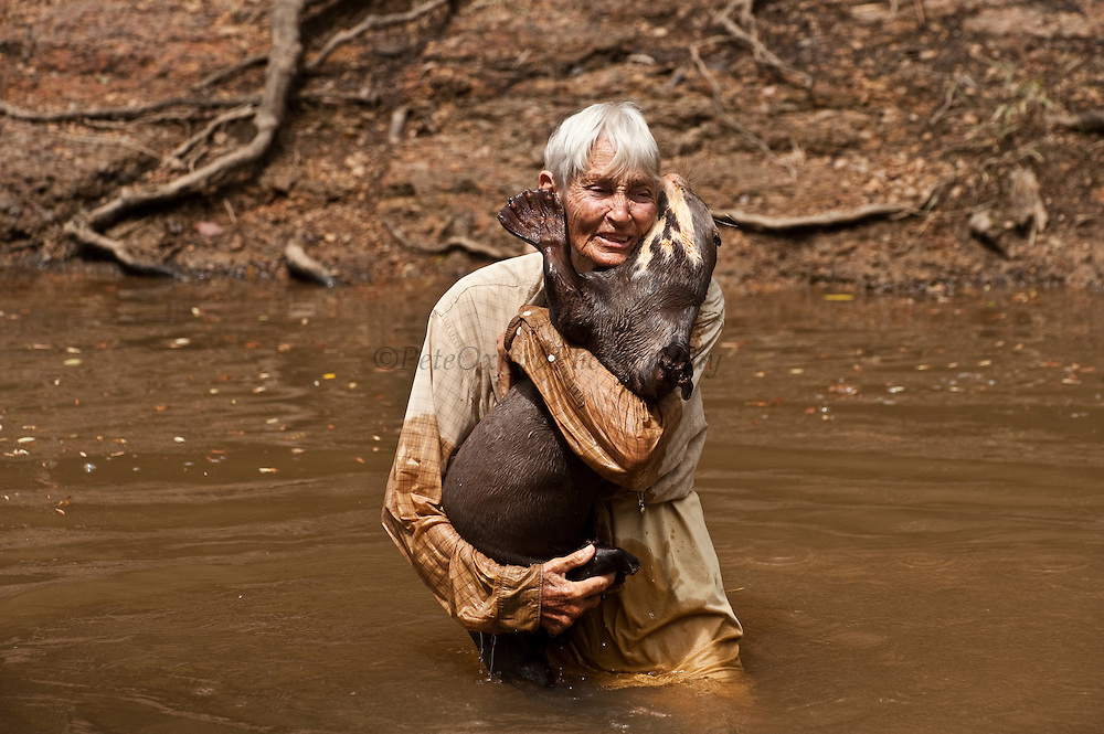 Diane McTurk & Giant Otter (Pteronura brasiliensis) HABITUATED. Karanambu Otter Trust for re-introduction<br /> Savannah<br /> Rupununi<br /> GUYANA. South America<br /> RANGE: Orinoco, Amazon, and Guianas river systems<br /> IUCN: ENDANGERED SPECIES