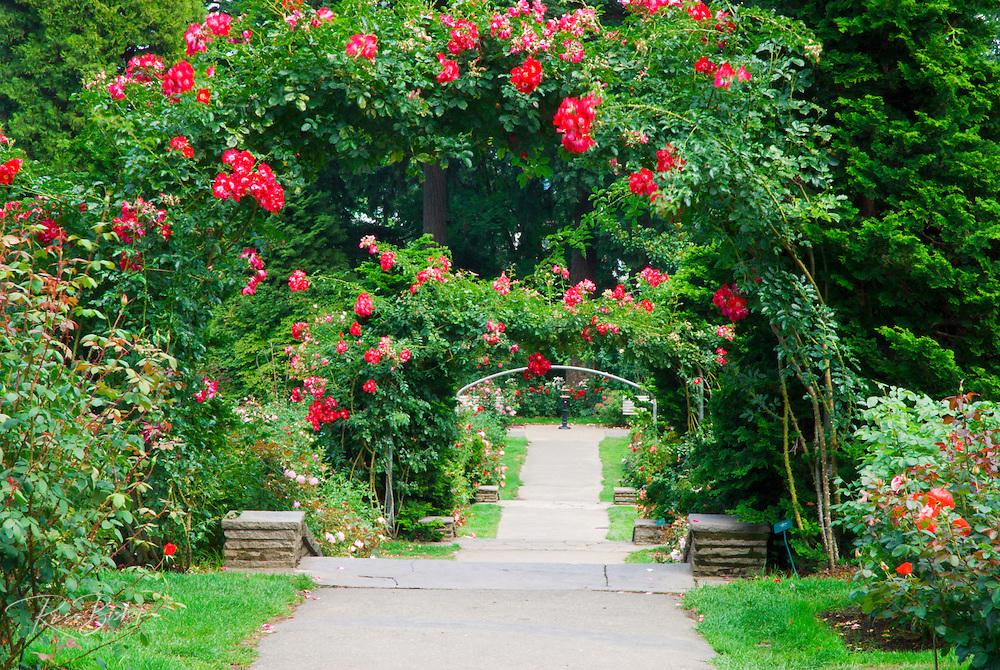 The International Rose Test Garden, Washington Park, Portland, Oregon