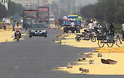 ZHENGZHOU, CHINA - SEPTEMBER 16: (CHINA OUT) <br /> <br /> Yellow corn kernels are aired in the sun along a road on September 16, 2015 in Zhengzhou, Henan Province of China. <br /> ©Exclusivepix Media