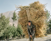 Carrying wheat. The traditional life of the Wakhi people, in the Wakhan corridor, amongst the Pamir mountains.