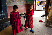 Young Buddhist monks during a break in the morning ceremony (puja) at Thiksey Monastery, Ladakh, India
