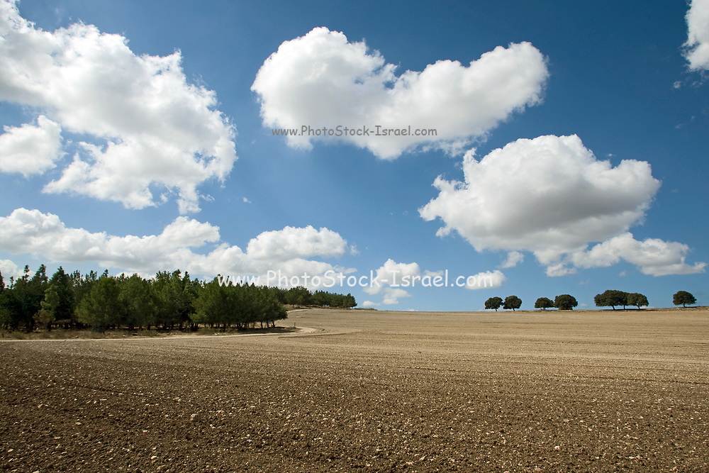 Dramatic cloudscape. White puffy clouds on a blue sky