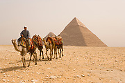 Bedouin riding on camels with the Khafre pyramid in the background, Giza, Egypt