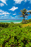 Patho Beach, Island of Mare, Loyalty Islands, New Caledonia