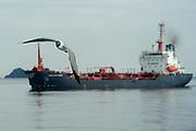 Travesía por el Canal / Ciudad de Panamá.  <br /> <br /> Gaviota reidora y barco esperando a cruzar el Canal de Panamá.