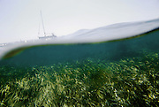 The oceanic Posidonia is an endemic plant in the Mediterranean with roots, stalk, leaves and fruit that lives under water between the surface and a maximum depth of some 40 metres...The plant forms prairies of Posidonia, called also, seaweed fields, although they are not formed by seaweed, that are the most important ecosystem of the Mediterranean, equivalent to the forests of the land ecosystems...They were declared in 1999 World Heritage by Unesco.
