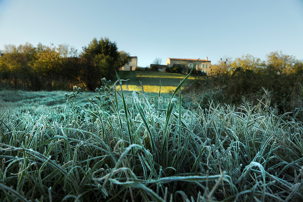 grass covered with a light frost during early morning hours
