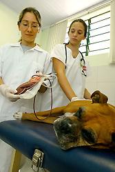 Luciana Lacerda, é aluna de doutorado de Veterinária na UFRGS e trabalha com uma pesquisa sobre transfusão de sangue em animais. FOTO: Itamar Aguiar / Preview.com