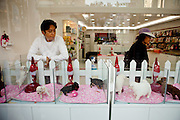 View to a shop which is selling puppies in the South Korean city of Daegu. The animals are presented in auquarium like glass boxes to the customers.