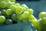 Close up selective focus photograph of Muscat Grape containers in the sunlight