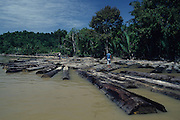 LOG RAFT, MALAYSIA. Sarawak, Borneo, South East Asia. Log raft on riverTropical rainforest and one of the world's richest, oldest eco-systems, flora and fauna, under threat from development, logging and deforestation. Home to indigenous Dayak native tribal peoples, farming by slash and burn cultivation, fishing and hunting wild boar. Home to the Penan, traditional nomadic hunter-gatherers, of whom only one thousand survive, eating roots, and hunting wild animals with blowpipes. Animists, Christians, they still practice traditional medicine from herbs and plants. Native people have mounted protests and blockades against logging concessions, many have been arrested and imprisoned.