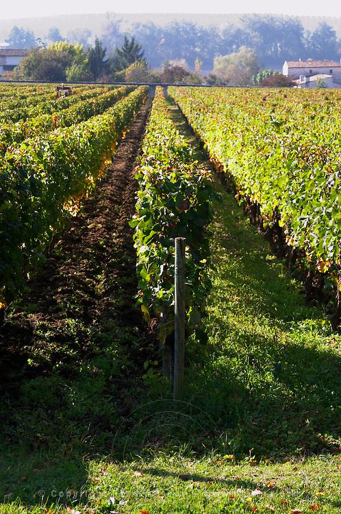 vineyard chateau la dauphine fronsac bordeaux france