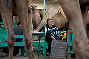 Faith D'Aluisio, one of the authors of the book What I Eat: Around the World in 80 Diets surrounded by camels at the  Birqash Camel Market outside Cairo, Egypt. Contrary to popular belief, camels' humps don't store water; they are a reservoir of fatty tissue that minimizes the need for heat-trapping insulation in the rest of their bodies; the dromedary, or Arabian camel, has a single hump, while Asian camels have two. Camels are well suited for desert climes: their long legs and huge, two-toed feet with leathery pads enable them to walk easily in sand, and their eyelids, nostrils, and thick coat protect them from heat and blowing sand. These characteristics, along with their ability to eat thorny vegetation and derive sufficient moisture from tough green herbage, allow camels to survive in very inhospitable terrain.