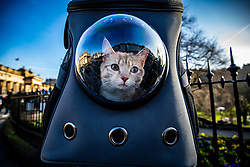 17MAR21 Cat in a backpack on Princes Street. Weather this afternoon in Edinburgh.
