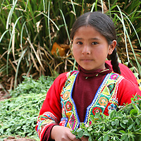 Americas, South America, Peru, Cusco. Young girl with greens for llamas at Awana Kancha breeding center.