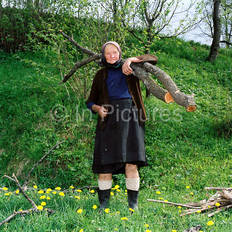 An elderly peasant farmer carries a tree branches home to use as firewood, Poienile Izei, Maramures, Romania