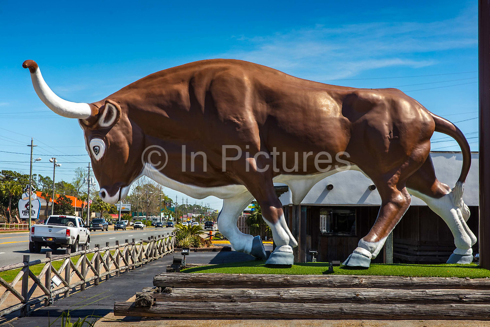 Giant fibre glass bull on Front Beach Road on 6th March 2020 in Panama City, Florida, United States. With an average of 320 days of Florida sunshine each year – and 27 miles of sugar-white sands bordering the clear, emerald green waters where the Gulf of Mexico and St. Andrew Bay converge – Panama City Beach is a favourite of travellers seeking an affordable beach vacation with year round offerings.