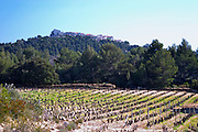 View over the vineyard in spring, the Le Castelet village on a hill top in the background. Grenache and Mourvedre Domaine de la Tour du Bon Le Castellet Bandol Var Cote d'Azur France