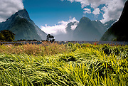"""Fiordland National Park, NEW ZEALAND: Milford Sound is a beautiful, deeply carved fjord. In geography, a """"sound"""" is a large sea or ocean inlet (larger than a bay), but a fiord (or fjord) is a narrow sea inlet that was carved by glacier. Published in May/June 2004 Sierra Magazine, Sierra Club Outings."""