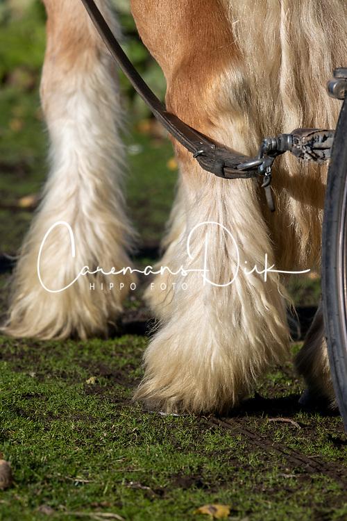 Palm paarden<br /> Stoeterij Diepensteyn - Steenhuffel  2020<br /> © Hippo Foto - Dirk Caremans<br /> 18/11/2020