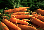 Photo of fresh carrot bunches at a vegetable stand