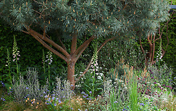 The Winton Beauty of Mathematics Garden, RHS Chelsea Flower show 2016. Designed by Nick Bailey