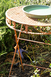 Zelda the cat lurks under the birdbath in the back yard of her Oakland, Calif. home, Friday, July 10, 2020. (Photo by D. Ross Cameron)