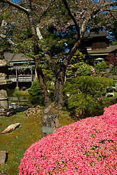 California: San Francisco. Japanese Tea Garden in Golden Gate Park.  Photo copyright Lee Foster.  Photo #: 24-casanf78904