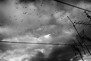 Stormo di uccelli. Case popolari del quartiere di Tor Sapienza. Roma 19 novembre 2014.  Christian Mantuano / OneShot