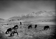 Kyrgyz herdman tends his sheep beside a high glacier-fed lake in a 3,600m (11,810 ft) high desert beneath 7,700m (25,250 + ft) high Kangur Shan, Chinese Turkestan.  As the glaciers recede, these valleys may slowly become uninhabitable for people or domesticated animals.
