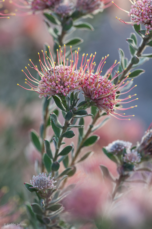 De Hoop Nature Reserve. Western Cape. South Africa.