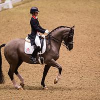 London International Horse Show 2012 - Olympia