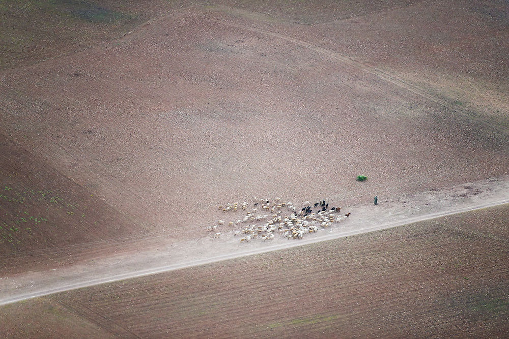 Aerial view of a shepherd with his sheep in the countryside of Marrakech, Morocco.