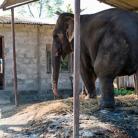 Mahout Chartou poses at the door of his simple single-room home next to Paban the elephant he cares for 24/7.