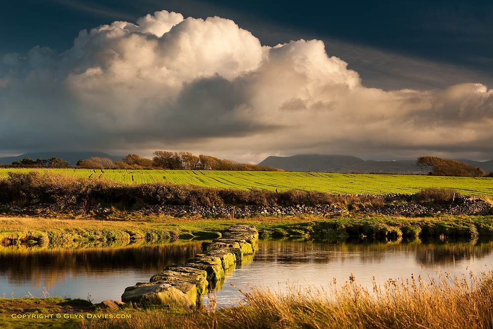 Dramatic large cumulonimbus clouds increased over lush rolling hillsides and farmland, whilst the ancient stepping stones navigate the walker across the wide gap of the Afon Braint River near Newborough on West Anglesey. The hills of Snowdonia canbe seen in the distance, and on the wall straight ahead sits a cock pheasant, creating an almost perfect traditional British countryside scene.