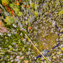 A new boardwalk in a cedar swamp at the Witt Swamp Preserve in Norway, Maine. Fall.
