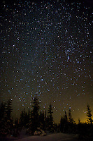 the Milky Way lights the sky in a winter forest scene, Mount Tahoma Trails, Ashford, WA, USA