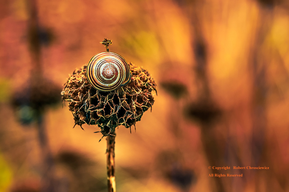 Race Among the Ruins: A predominantly yellow and black winter scene finds a snail high atop the skeletal remnants of a flower in Stanley Park, Vancouver British Columbia Canada.