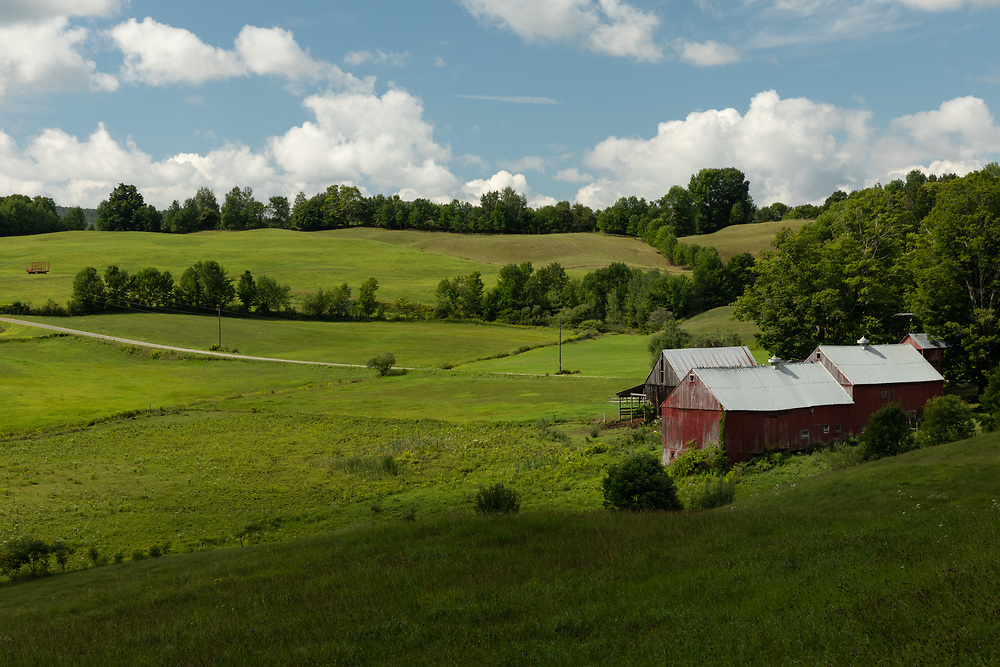 A summer morning on the hills of Jenne Farm.