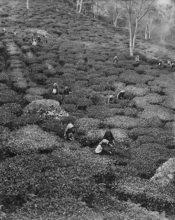 Tea Workers of Giele Tea Estate, on the Way to Siliguri, India, 1929