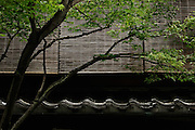 Japanese dwarf maple, ceramic roof tiles and reed blind - Kyoto, Japan