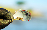 500px Photo ID: 4408989 - on the half shell
