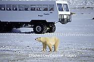 01874-061.03 Polar Bear (Ursus maritimus) & Tundra Buggy   Churchill  MB