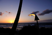 Coconut Palm tree and burning oil lamp on beach in silhouette, at sunset. Kona, Big Island, Hawaii