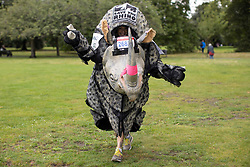 © Licensed to London News Pictures. 03/10/2021. London, UK. A runner in a rhino costume in Greenwich Park ahead of the start of the London Marathon.This London Marathon will be the first full scale staging of the race in more than two years due to the Coronavirus Pandemic.  Photo credit: George Cracknell Wright/LNP