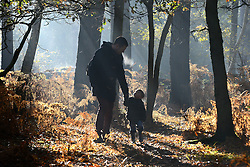 © Licensed to London News Pictures. 13/11/2013. A man and a young boy walk through the misty woodland. Burnham, UK Autumn sunshine through the trees at Burnham Beeches, South Buckinghamshire on WEDNESDAY 13TH NOVEMBER. The beeches covering 220 hectares is primarily noted for its ancient beech and oak pollards. Photo credit : Stephen Simpson/LNP