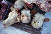 Cow heads for sale on the Yakutsk outdoor fish and meat market. Yakutsk (Russian: Яку́тск) is a city in the Russian Far East, located about 4° (450 kilometres) south of the Arctic Circle. It is the capital of the Sakha (Yakutia) Republic in Russia with a major port on the Lena River. The city has a population of 264.000 (2009). Yakutsk is one of the coldest cities on Earth. The average monthly winter temperature in January is around −43,2 °C. Yakutsk, Jakutsk, Yakutia, Russian Federation, Russia, RUS, 16.01.2010.