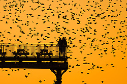 © Licensed to London News Pictures. 25/02/2018. Aberystwyth, UK. The sun setting, framed dramatically behind Aberystwyth pier, picks out the silhouettes of some of the tens of thousands of tiny starlings as they roost for the night, huddled together for warmth and safety, on the forest of cast iron girders and beams underneath the town's distinctive Victorian era seaside attraction.Photo credit: Keith Morris/LNP