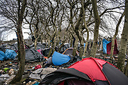 Calais, France, 23 Februari 2015, Hundreds of tents find shelter under small trees around the jungle of Tioxide.