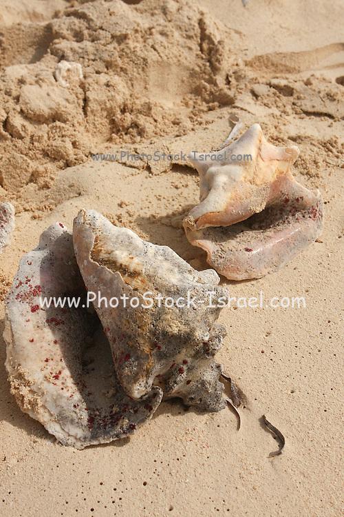 Sea Shells on the beach. Photographed at Grand Turk Caribbean Island